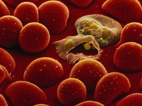 malaria-parasites_1059_600x450